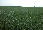 Brazil may surpass U.S. soybean production in 2013/2014