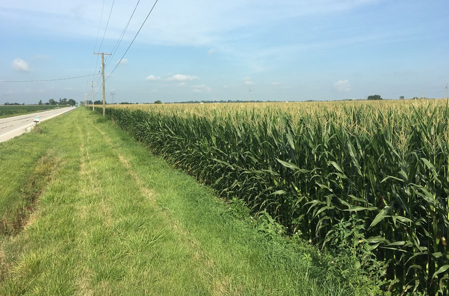 View of 80 acres on Wilmington-Peotone road, Florence Township in Will County